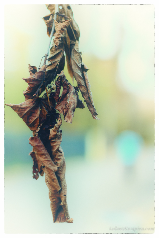 Jesienny spacer - fotograf warszawa-2