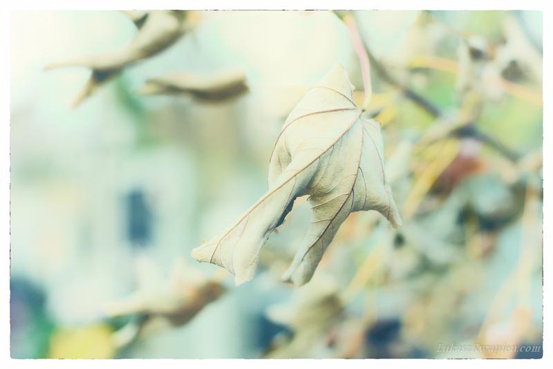 Jesienny spacer - fotograf warszawa-1