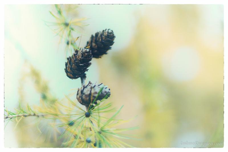 Jesienny spacer - fotograf warszawa-3