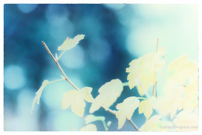 Jesienny spacer - fotograf warszawa-4