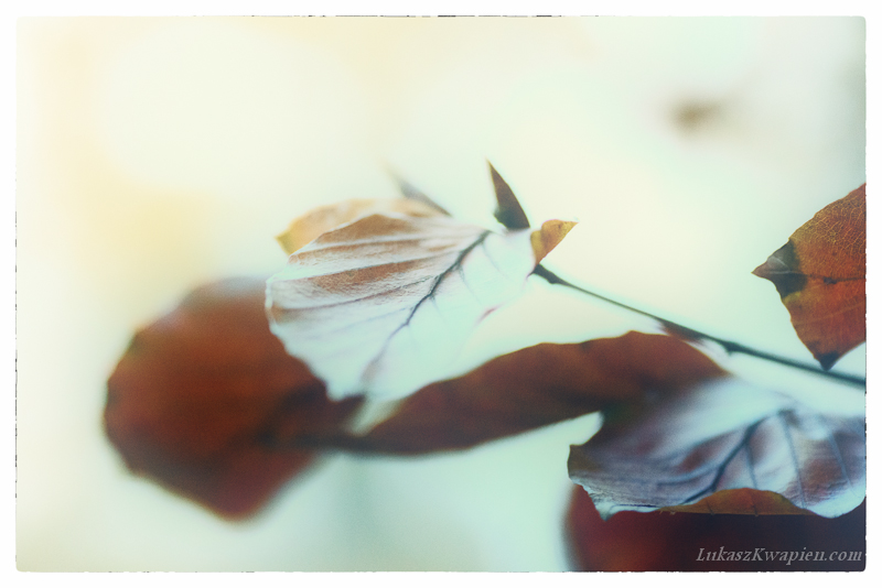 Jesienny spacer - fotograf warszawa-5